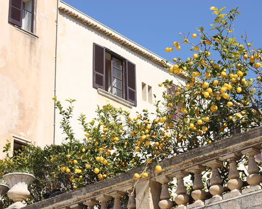 A balcony of lemon trees: pure Italian poetry