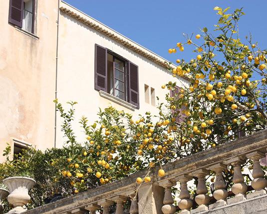 A balcony of lemon trees: pure Italian poetry