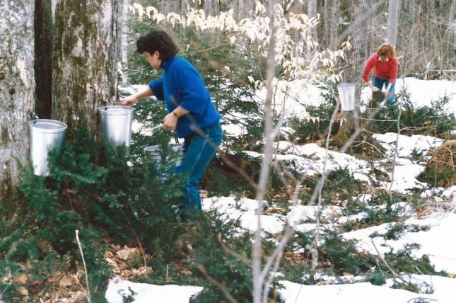 Harvesting maple sap in the late 1980s // FoodNouveau.com