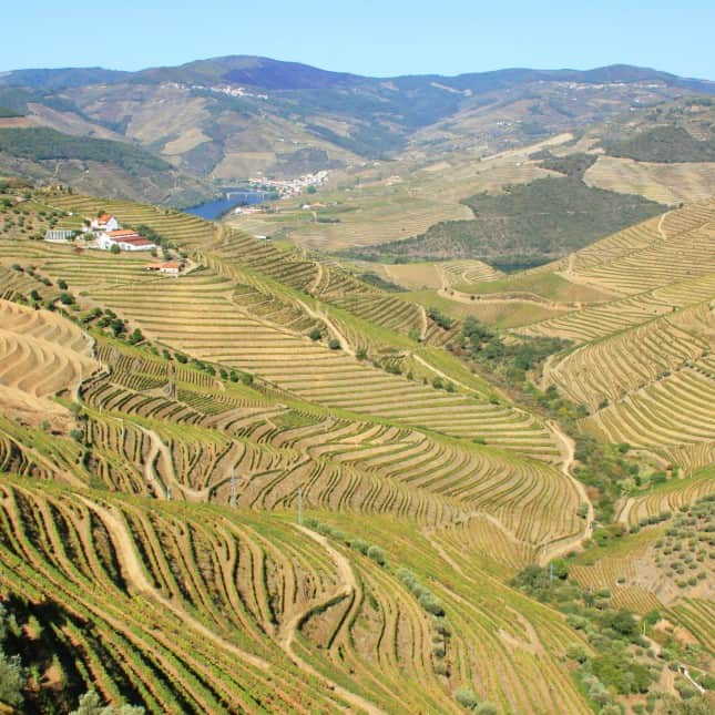 Breathtaking view of the Douro Valley, Portugal // FoodNouveau.com